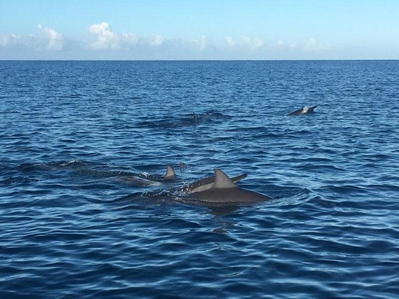 """Delfine auf Mauritius - gefuehrte Tour mit """"The friendly Dodo"""""""