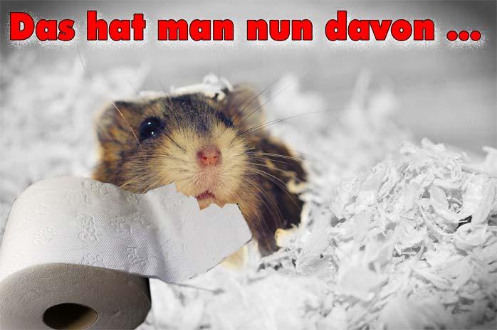 Hamsterkäufe sind gefährlich, besonders was Klopapier betrifft ...